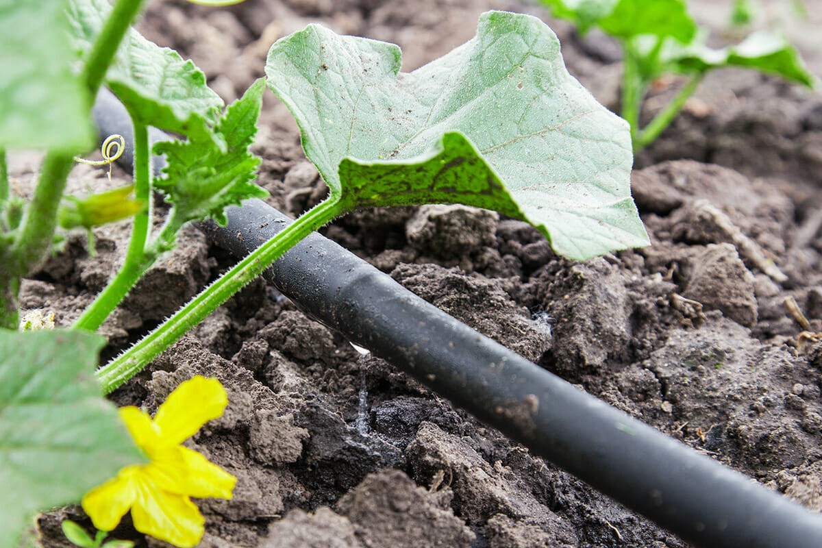 http://nxplastics.com/portal-img/default/1/how-to-build-a-drip-irrigation-system-modern-farmer.jpg
